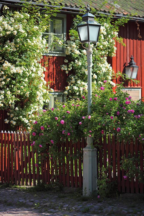 Декорирование плетистыми розами