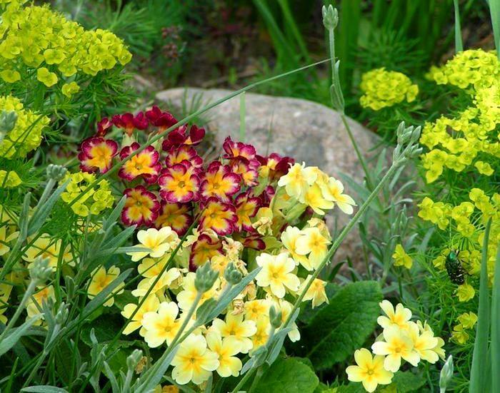Цветы на горке