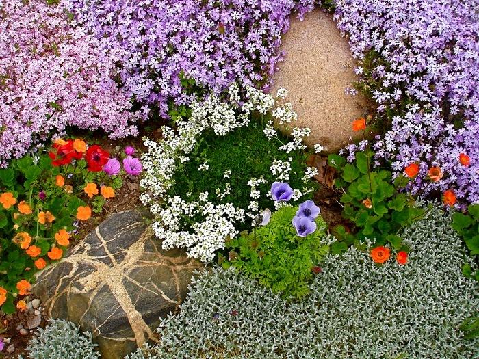 Как сажать почвопокровные цветы